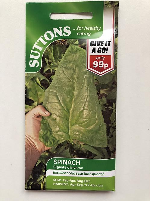 Spinach 'Gigante d'Inverno'
