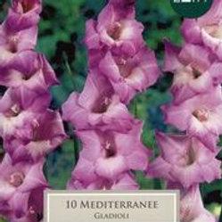 Mediterranee Gladioli