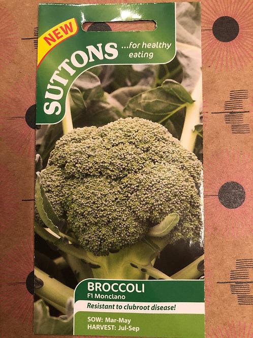 Broccoli F1 Monciano