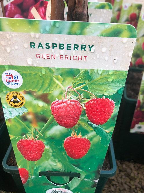 Raspberry - Glen Ericht