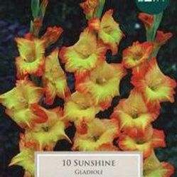 Sunshine Gladioli