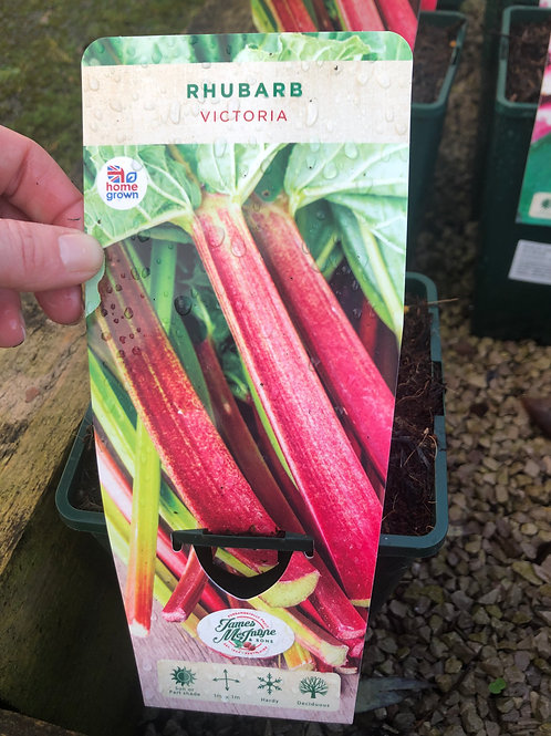 Rhubarb - Victoria