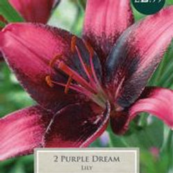 Purple Dream Lily