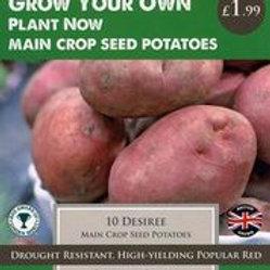 Desiree Seed Potato