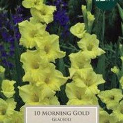 Morning Gold Gladioli