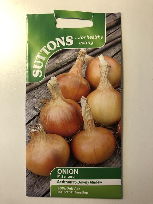 Onion F1 Santero