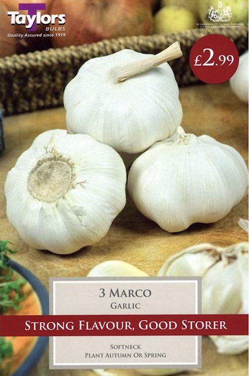 3 Marco Garlic Bulbs