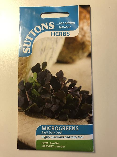 Microgreens 'Basil Dark Opal'
