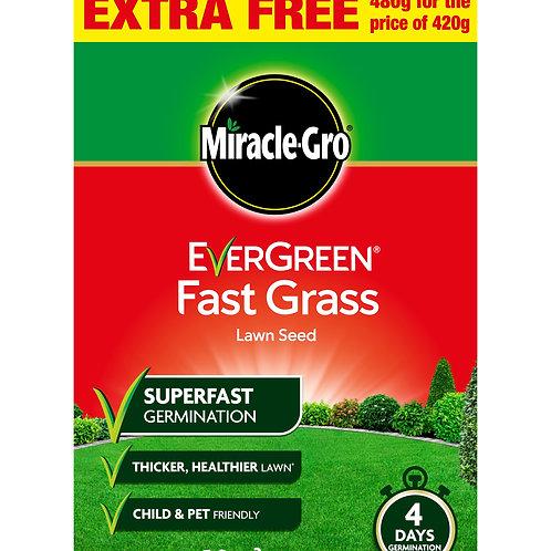 Evergreen Fast Grass