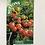 Thumbnail: Tomato 'Tumbling Bella'