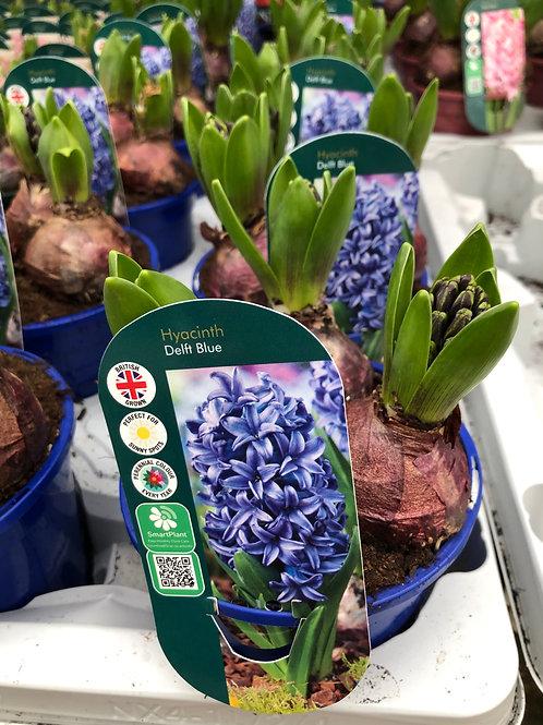 Delft Blue Hyacinth Large Pot