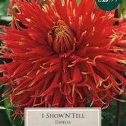 'Show N Tell' Dahlia