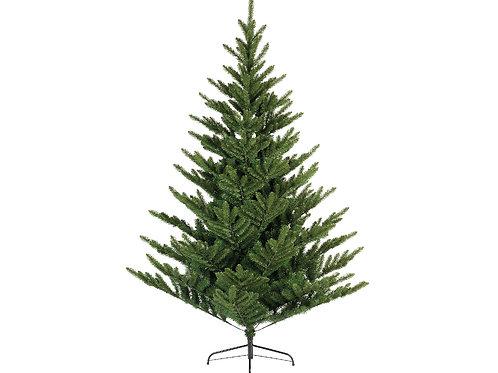 6ft Liberty Spruce