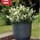 Thumbnail: Windsor Glazed Planter Black 32cm