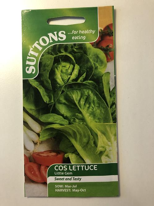 Cos Lettuce- Little Gem