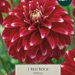 Red Rock Dahlia