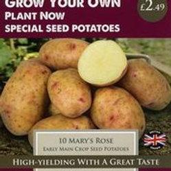 Mary's Rose Seed Potato
