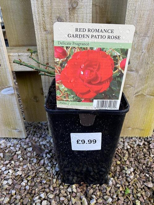 Patio Rose - Red Romance