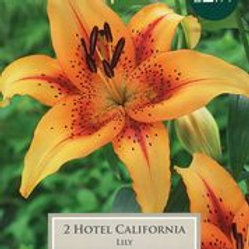Hotel California Lily