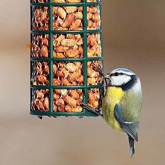 birdcare-2-640-square.jpg