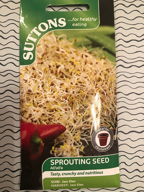 Sprouting Seed Alfalfa