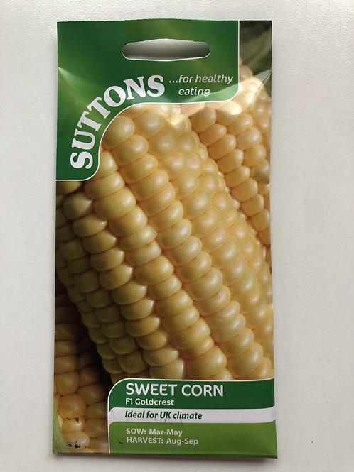 Sweet Corn F1 Goldcrest