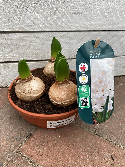 Hyacinth Bowl Pot - White Pearl