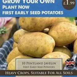 Pentland Javelin Seed Potatoes