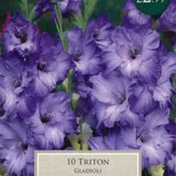 Triton Gladioli