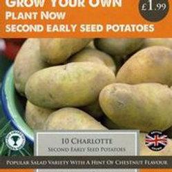 Charlotte Seed Potato