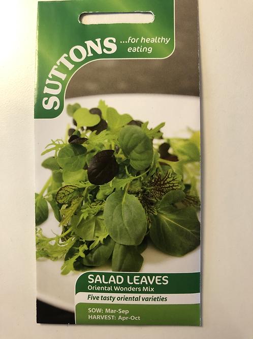 Salad Leaves 'Oriental Wonders Mix'