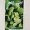 Thumbnail: Spinach 'F1 Amazon'