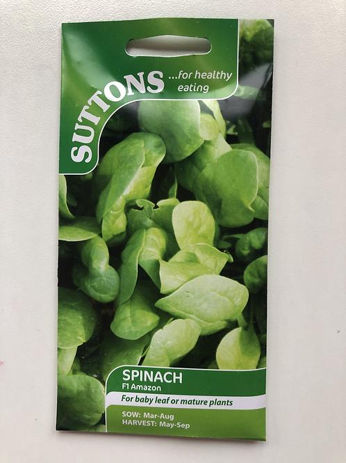 Spinach 'F1 Amazon'