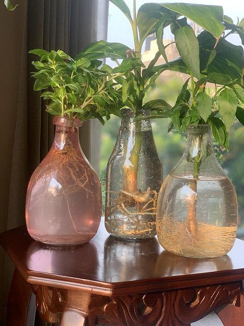 Terrariums Vases S/3