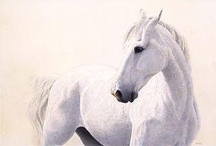 'White and Wild' 90x60cm 595,-.jpg