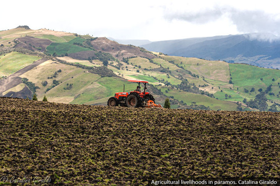 Paramos_Colombia_CatalinaGiraldo-(8).jpg