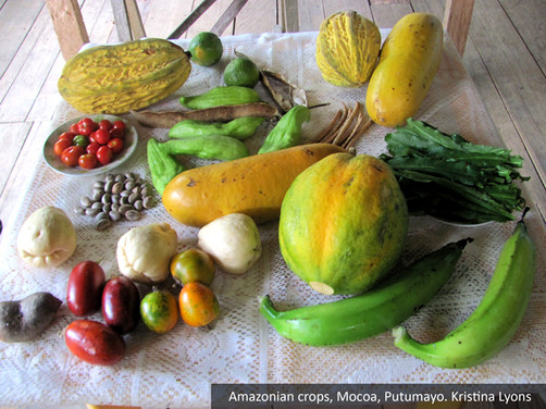 Figure-5.8-Diverse-Amazonian-fruits-and-