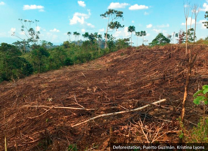 Deforestacin.jpg
