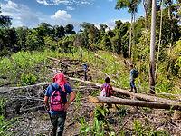JLG-Upenn_Deforestacion_5.jpg
