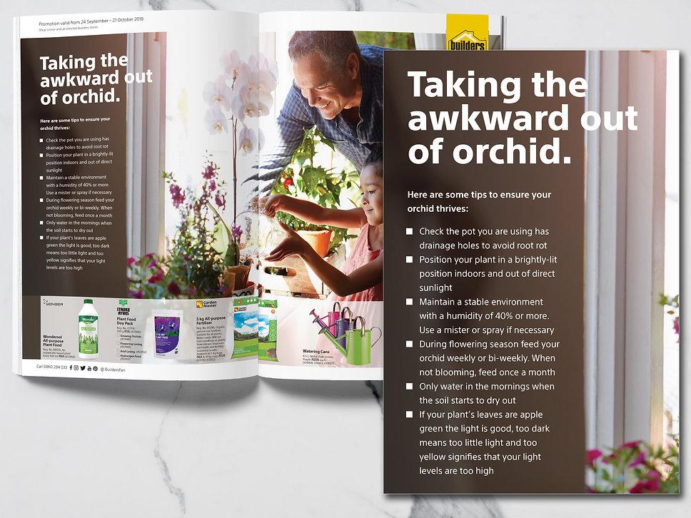 OrchidArticle.jpg