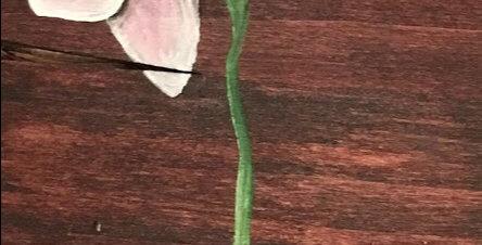 Erotic Orchids