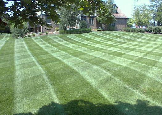 010808-008Nice_lawn_stripe2.14153420_std