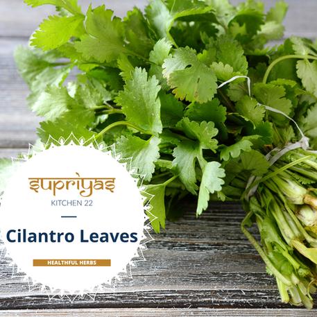 Healthful Herbs: Cilantro Leaves