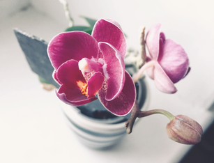 Orchids_edited.png