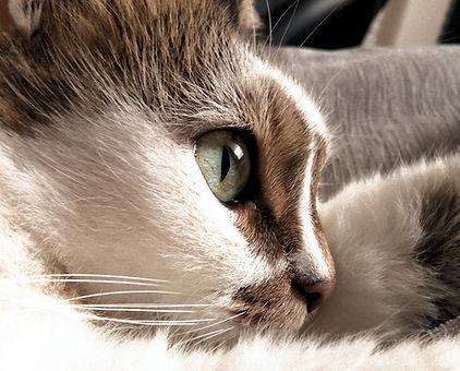 Cat's%2520Eye_edited_edited.jpg