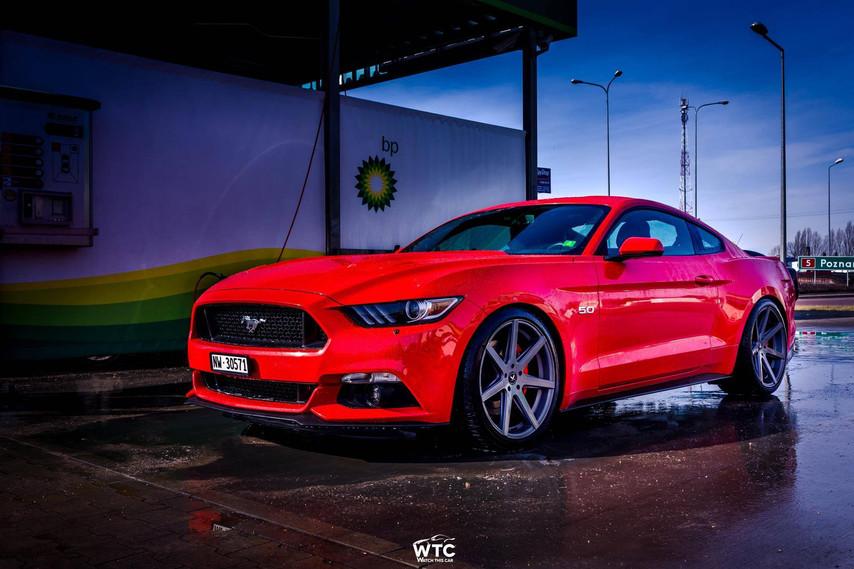 Barracuda Virus Ford Mustang 1.jpg