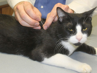 Cross-Category Innovation, Acupuncture for Pets