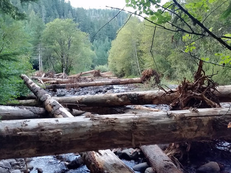 """""""We don't need no stinkin' Beavers!""""  Beaver Habitat (OUT), Tenmile Creek Restoration (IN) - UPDATE"""