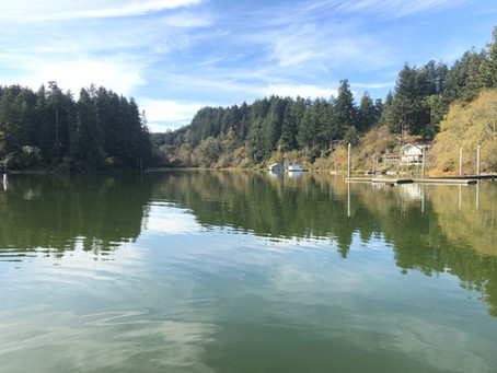 November Tenmile Creek Restoration Update