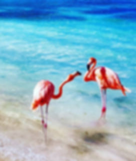flamingo_edited.jpg